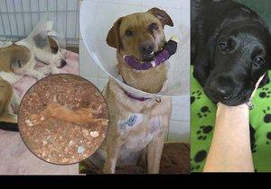 Češi pořádají hon na tyrany zvířat: Po případu zbitého štěněte zveřejňují nepotrestané bestie.