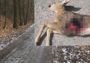 Myslivci mají problémy s pejskaři v Modřanské rokli, někteří mazlíčci tu štvou a zabíjejí lesní zvěř.