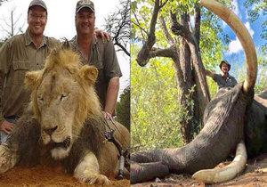 Lev Cecil i slon Tusker. Kolik ještě zvířat lovci zabijí, než jejich druh zcela vyhyne?