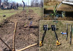 V úterý se v rámci projektu Ukliďme Česko začala zvelebovat Štvanice. Vysázely se nové stromy, ovocné keře i okrasné květiny.