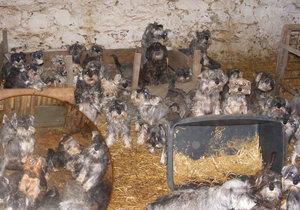 Množírna v Mezně podle ochránců zvířat funguje dál.