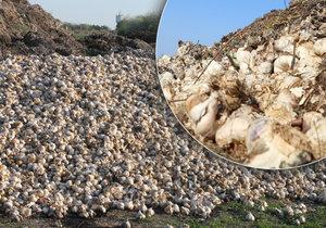 Na pole někdo vyhodil tuny česneku. Začal hnít a páchnout do okolí.
