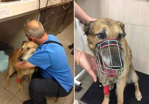 Dojemné shledání! Pro sraženého psa si přijel zoufalý majitel. Vykradli mu dílnu a psa pustili