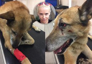 Sraženého psa Dinga zachraňovala i herečka Víznerová: Nejde o natáčení filmu, ale o skutečný život!