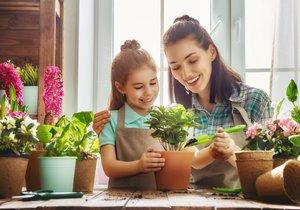 Jak vybrat nejvhodnější rostliny pro malé zahradníky