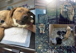 Týrání zvířat v Česku je častější. (Ilustrační foto)