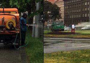 Prahu po týdnech sucha svlažil déšť. Vodu na kropení záhonů tak bylo možné použít lépe, třeba k zálivce stromů, které v metropoli usychají.