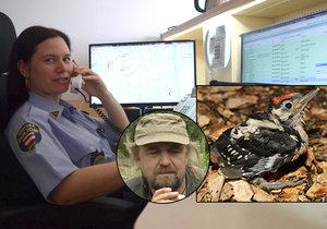 Telefonát mezi ornitologem, malým strakapoudem a jeho zachráncem ornitologem Zdeňkem Machařem zprostředkovali dispečeři brněnské městské policie.
