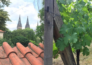 Tajemství vyšehradského děkanství: V jeho dvoře se skrývá vinice navazující na tisíciletou tradici