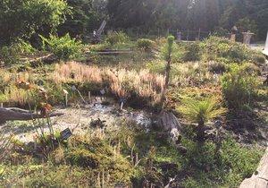 I rostliny v Botanické zahradě hl. m. Prahy se musejí potýkat s vedry. Naštěstí je o ně ale dobře postaráno.