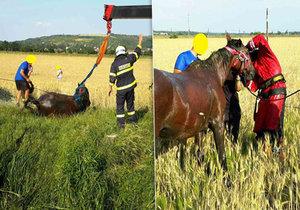 Kůň uvízl v blátě. Zvíře museli vyprostit hasiči pomocí jeřábu.