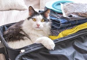 I s kočkou se dá cestovat, je třeba se jen dopředu připravit.