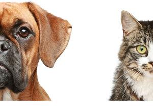Jsou chytřejší psi, nebo kočky? Vědci ve věčném sporu udělali jasno!