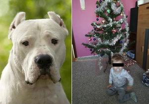 Policie v případu Vlastíka, kterého zakousl pes, obvinila třicetiletého muže. Jde pravděpodobně o příbuzného.