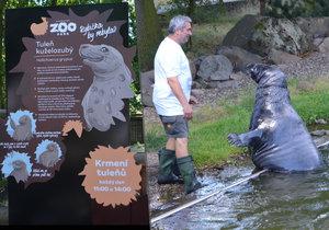 Zoopark v Chomutově startuje léto plné změn: V nové kampani promluví zvířata!