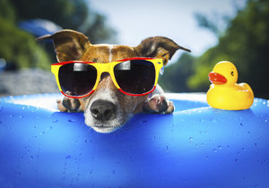 Dopřejte v horkých letních dnech osvěžení i svému psovi.