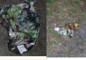 Otřesný nález krutého zacházení se psem odhalily tři dívky v parku Bor na Tachovsku. V igelitce byla zdechlina pejska s ovázanou tlamou lepicí páskou.