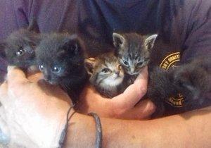 Sotva třítýdenním koťátkům hrozil a pomalá a mučivá smrt žízní. Někdo je pohodil v lese na Tachovsku.