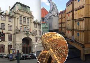 Na střeše Nové radnice Magistrátu hl. m. Prahy žijí stovky tisíc včel. Jejich med je mezi nejkvalitnějšími v republice, k prodeji ale určený není.