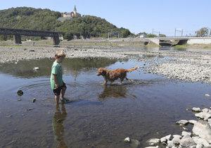 Čenda Bochez v korytě řeky loví rybičky.
