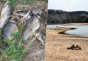 Sucho ohrožuje rybí populaci.