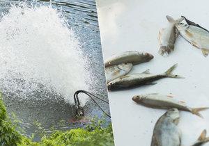 V Čimickém rybníku bojují ryby o přežití.