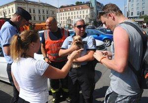 Pejska uvězněného v rozpáleném autě vysvobodili hasiči.