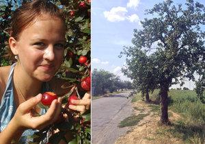 Kam v Praze na ovoce zadarmo? Pro sběrače existuje web a mobilní aplikace s mapou divokých rostlin