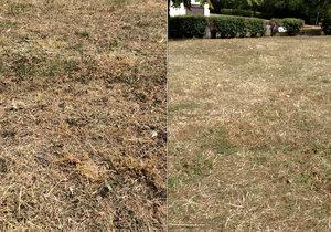Nepromyšlené sečení trávy během tropického léta odsuzuje porost k záhubě.