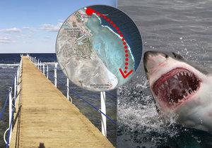 Čecha na dovolené v Marsá Alam zabil žralok (ilustrační foto).