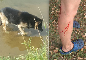 V České Lípě došlo ke krvavému útoku psů.