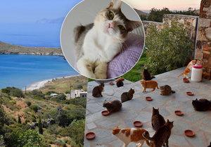 V Řecku hledají člověka, který bude pečovat o kočky.