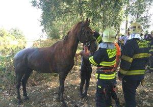 Kůň byl předán šťastnému majiteli.
