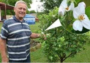 Příroda se zbláznila: V Havířově rozkvetly jabloně! Stromky se přitom pod úrodou prohýbají