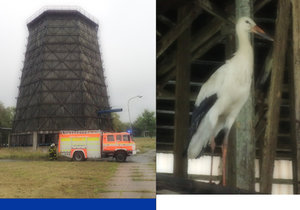 Čáp držel smuteční stráž u uhynulého druha pět dní: Z chladicí věže ho vysvobodili hasiči