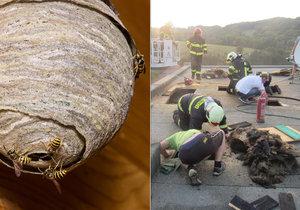 Majitel domu chtěl zničit vosí hnízdo, podpálil si střechu nad hlavou!