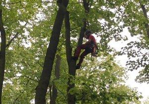 Ve Stromovce právě dochází k průběžnému prořezu suchých větví stromů.