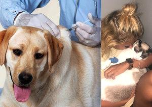 Seznamovací veterináři