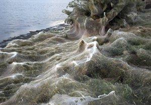 Fotograf zachytil obří pavučinu na řeckém pobřeží. Měří ohromných 300 metrů.