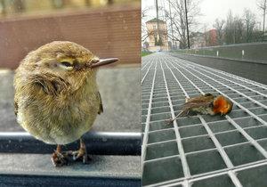Nárazem do průhledných stěn u nás umírají stovky tisíc ptáků ročně, systematické řešení neexistuje.