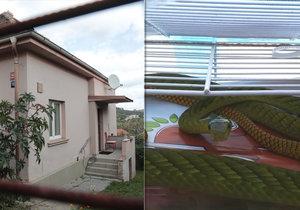 Žena, kterou uštkla jedovatá mamba: Je v umělém spánku! Dostala antisérum, hada stále hledají