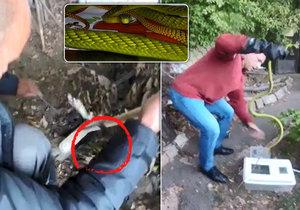 Takhle lovili mambu zelenou.