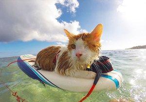 Jednooká kočička Kuli na surfu nebojácně brázdí vlny oceánu.