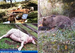 Místní se bojí spíš o medvěda než jeho.