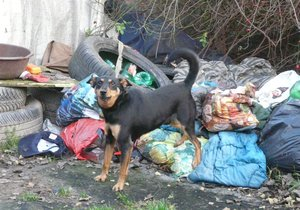 Kiki se k bezdomovcům vrací jakou součást týmu dobrovolníků.