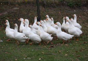 Husička na tisíc způsobů: Na Smíchovské náplavce připraví její maso netradičně