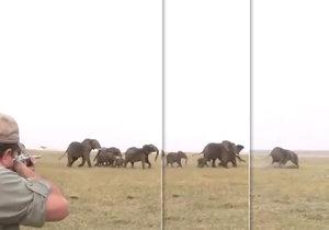 VIDEO: »Miř mezi oči, « říká jeden lovec druhému během honu na slony v Namibii