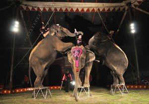 MZe navrhuje úplný zákaz vystupování a drezury zvířat v cirkusech