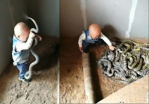 Šokující záběr ukazuje chlapce hrajícího si v klubku hadů.