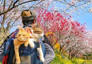 Kočky Fuku-Chan a Daikichi už se svým páníčkem procestovaly téměř celé Japonsko.